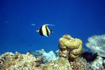 Путешествие на Мальдивы. Подводный мир. Февраль 2017 года